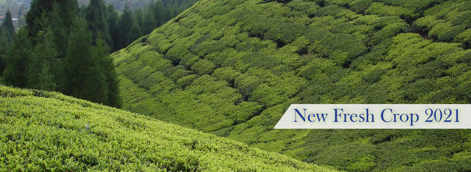 newcrop
